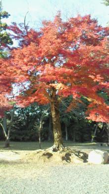 コアラフレンズ つるはら耳鼻科(奈良市) スタッフブログ-201011241532000.jpg
