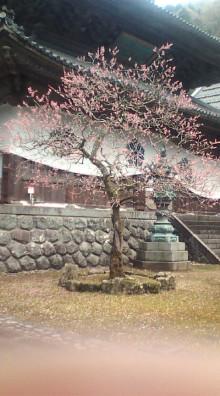 コアラフレンズ つるはら耳鼻科(奈良市) スタッフブログ-PIC00005.JPG