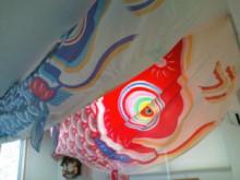 コアラフレンズ つるはら耳鼻科(奈良市) スタッフブログ-20120424150712.jpg