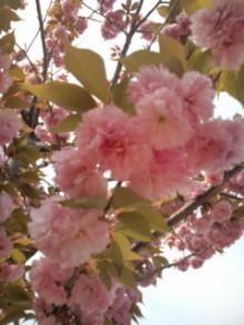 コアラフレンズ つるはら耳鼻科(奈良市) スタッフブログ-20120425101304.jpg