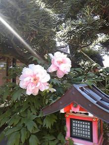 コアラフレンズ つるはら耳鼻科(奈良市) スタッフブログ-120427_144514.jpg