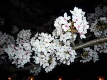 コアラフレンズ つるはら耳鼻科(奈良市) スタッフブログ