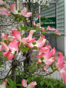 コアラフレンズ つるはら耳鼻科(奈良市) スタッフブログ-201004201414000.jpg