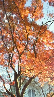 コアラフレンズ つるはら耳鼻科(奈良市) スタッフブログ-201011241535000.jpg