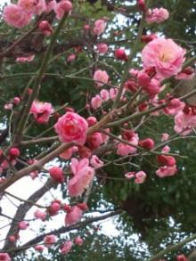 $コアラフレンズ つるはら耳鼻科(奈良市) スタッフブログ-20110220142400.jpg